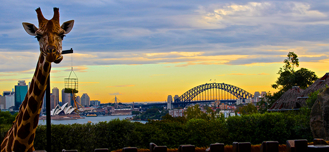 Sydney by Carly Levine
